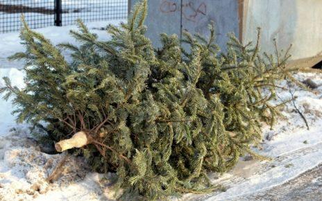 В МЧС советуют выбросить елки как можно скорее